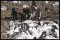 Waterfowl Hunt Pictures